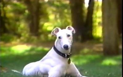 Greyhound Friends Inc.